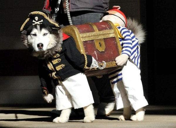 best-dog-costume-ever-pirate